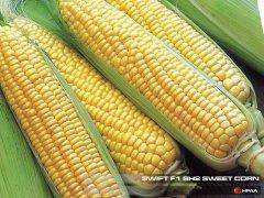 Swift F1 SH2 Sweet Corn