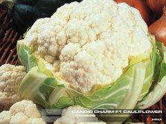 Candid Charm F1 Cauliflower