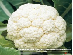 Goodman F1 Cauliflower