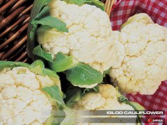 Igloo Cauliflower