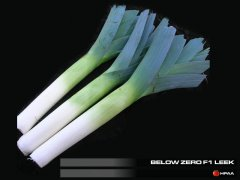 Below Zero F1 Leek