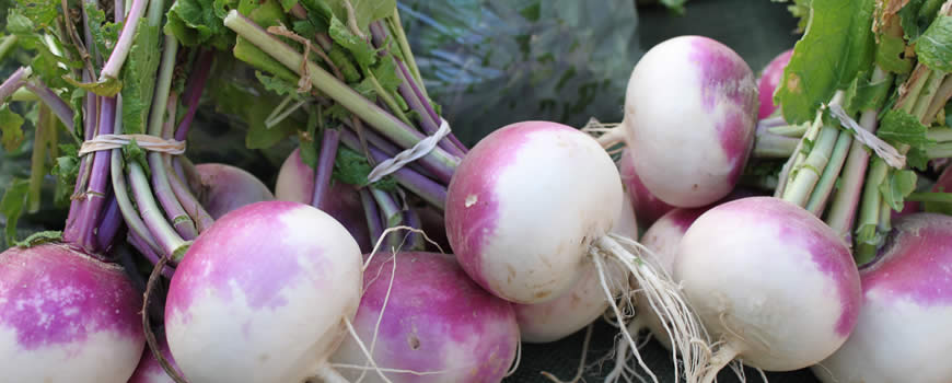 Turnips Harvested