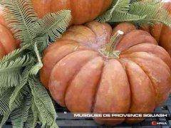 Musquee de Provence Winter Squash