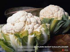Autumn Giant Cauliflower