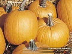 Tom Fox Pumpkin